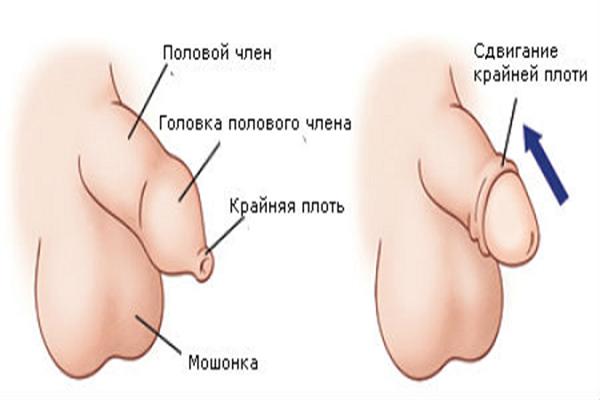 От чего растет мужской орган