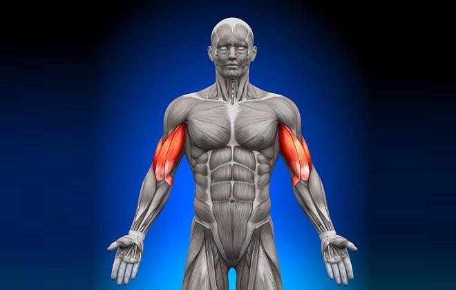 Креатинин зависит от количества мышц у мужчин