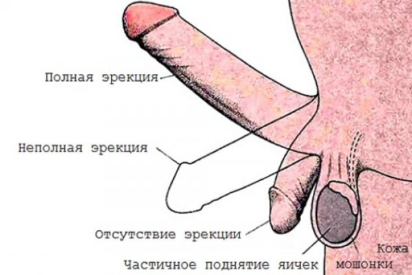 мужская эрекция картинка