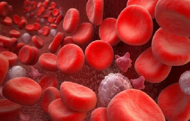 Взгляд на кровь под микроскопом